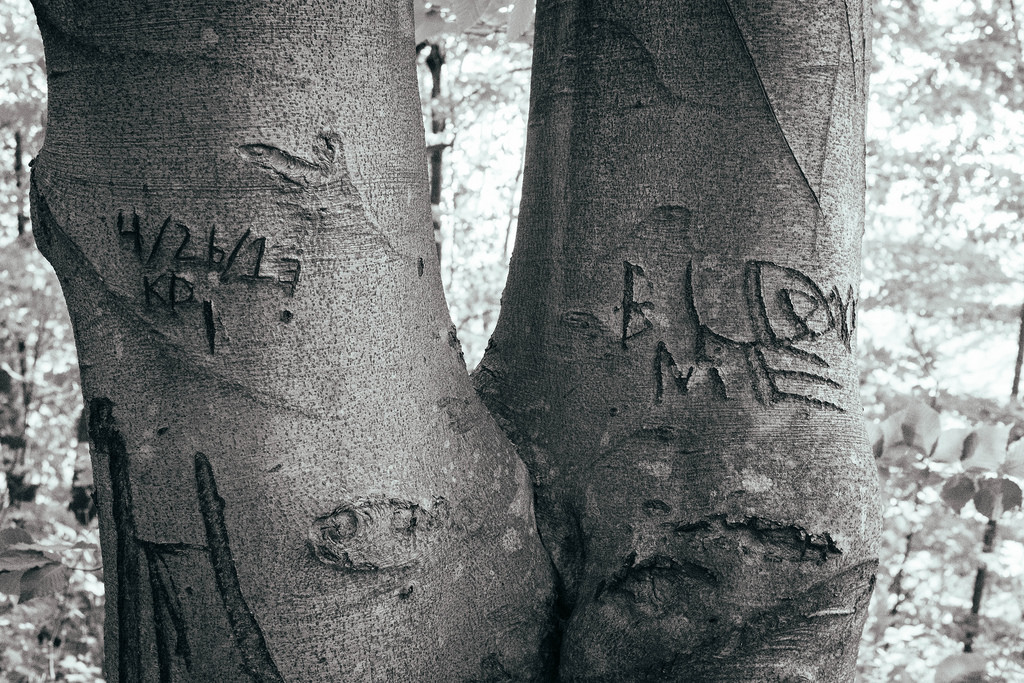 scarred-trees-black-and-white