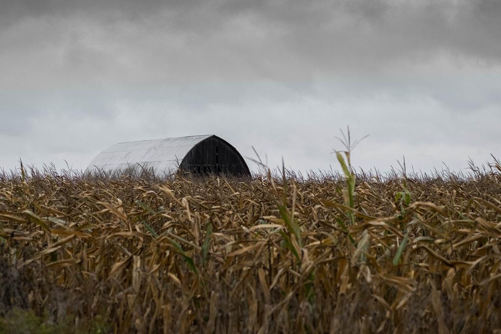 barn-corn-rain