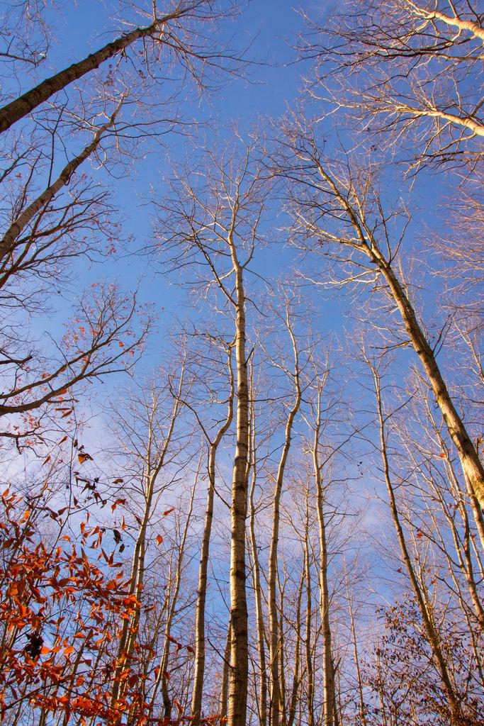 trees_deefield