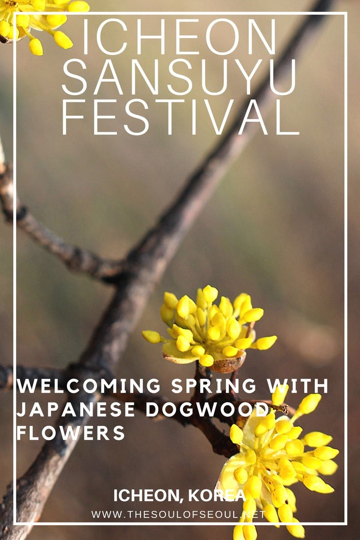 Icheon Sansuyu Festival, Icheon, Korea: Icheon is host to a Japanese Dogwood flower festival each spring in Korea. This townie get together offers traditional Korean games, eats and flowers galore as well as a great spot to hike for the day. Check Icheon out this spring in Korea.