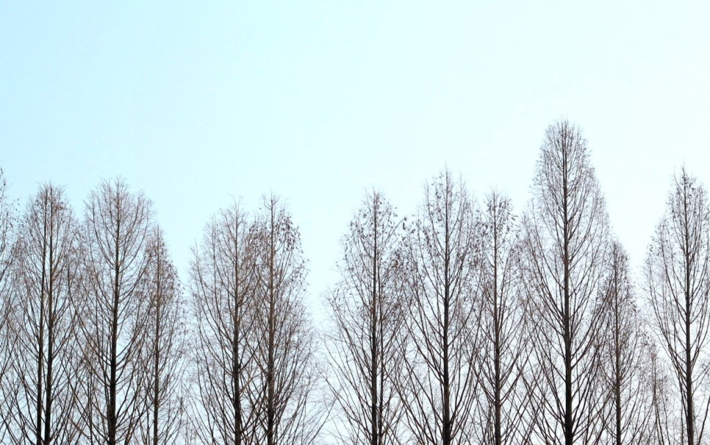 Chuncheon, Korea: Nami Island Trees in the sky