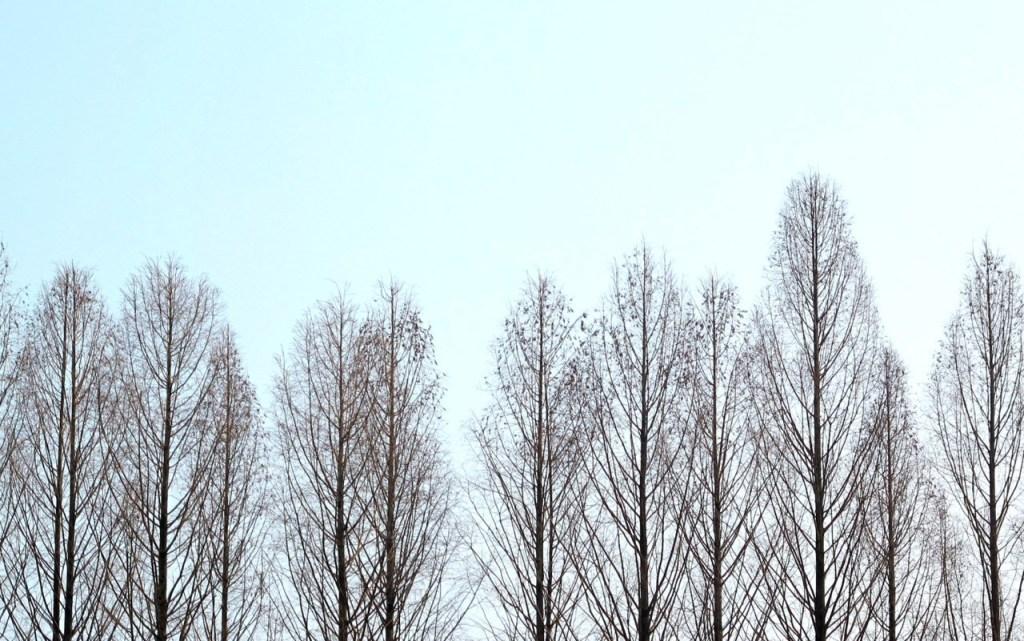 Chuncheon, Korea: Nami Island Trees in the sky