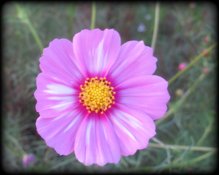 Cosmos in the Fall