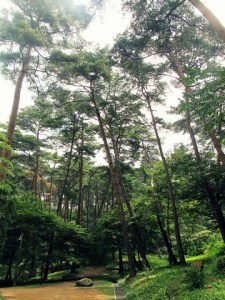 Taean-gun: Anmyeondo Recreational Forest
