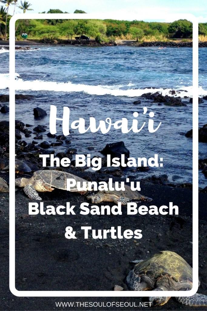 Hawaii, USA: The Big Island: Punalu'u Black Sand Beach & Turtles