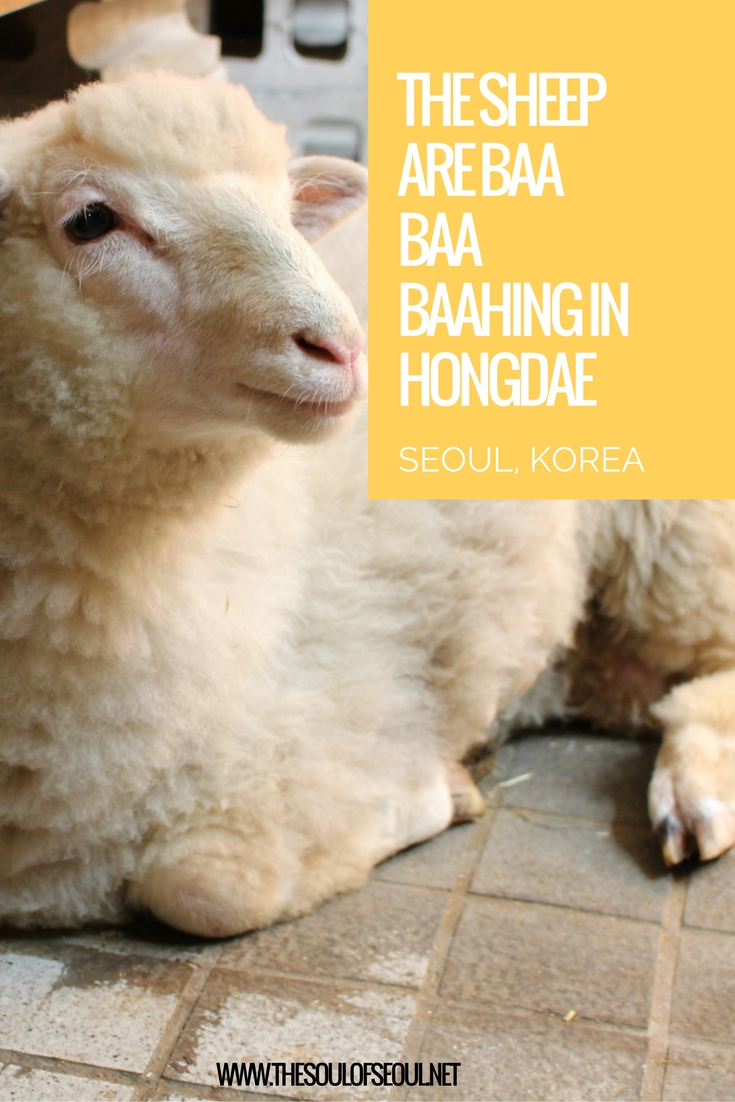 The Sheep Are Baa Baa Baahing in Hongdae, Seoul, Korea