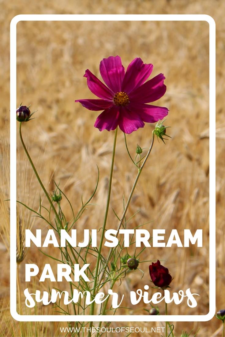 Nanji Stream Park, Summer Views, Seoul, Korea