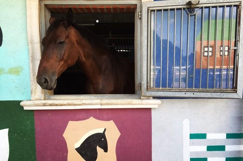 Gwacheon Horse Racing Track, Let's Run Park, Seoul, Korea