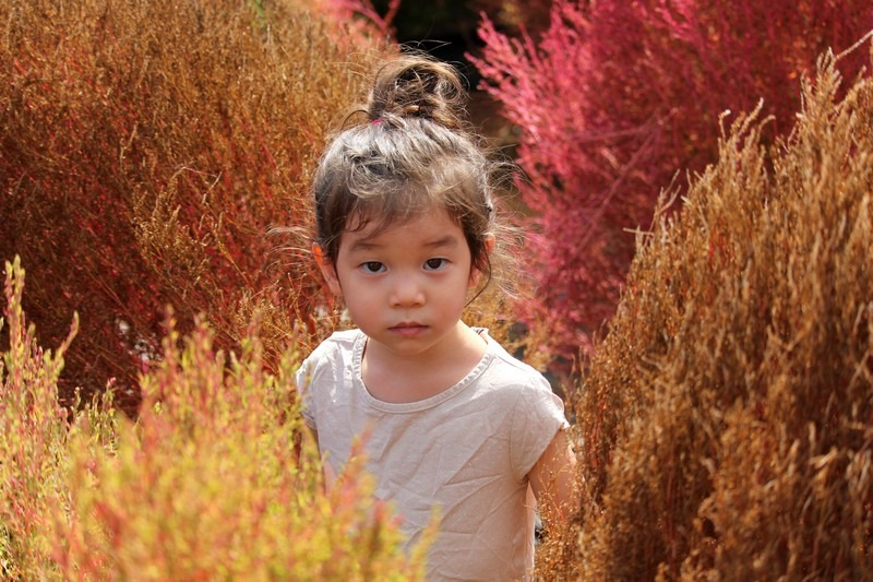 Nari Park, Yangju, Korea: baby and autumn flowers