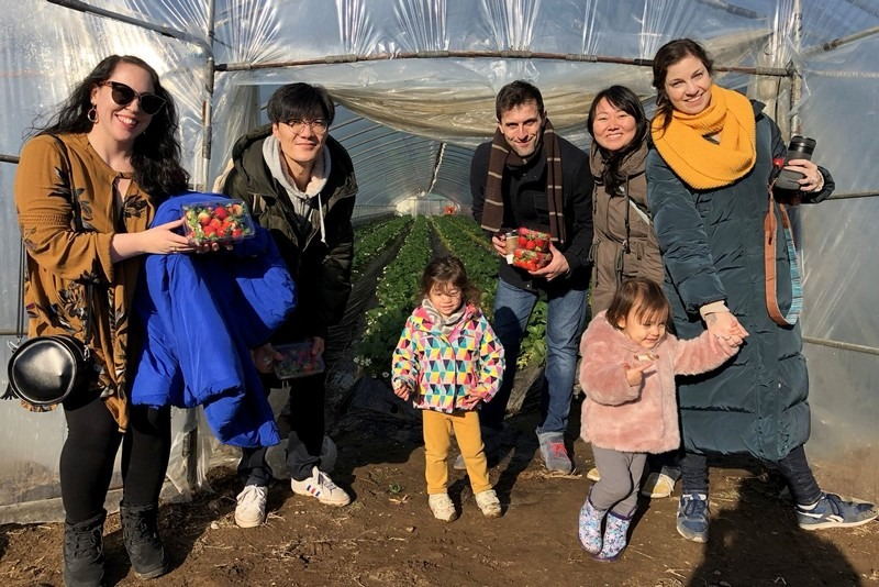 Daega Farm, Strawberry Picking, Namyangju, Korea