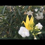 Día 196 - Flores