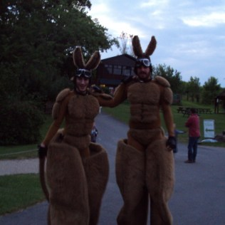 Kangaroo Men