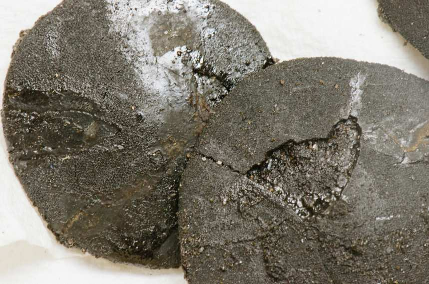 Ancient sand dollars found in the shaft, blackened by tar.