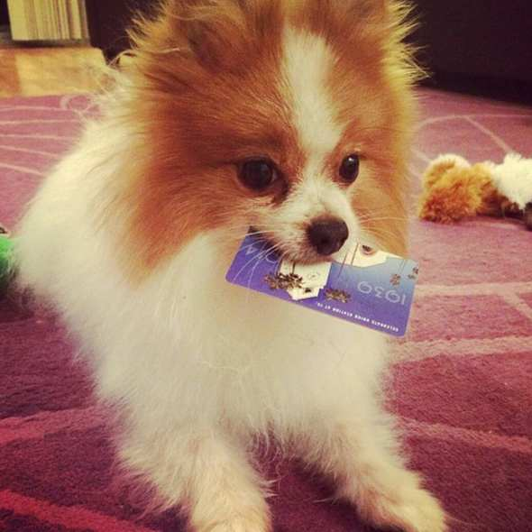 Aw look at that dog. Photo via Instagram @nikko_bear