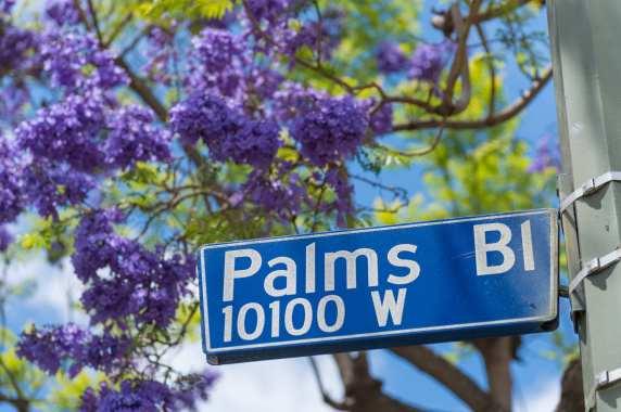 Many jacarandas inhabit Palms.