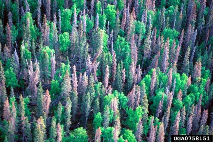 Photo: U.S. Forest Service.