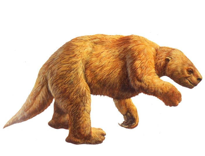 Harlan's ground sloth. Credit: La Brea Tar Pits.