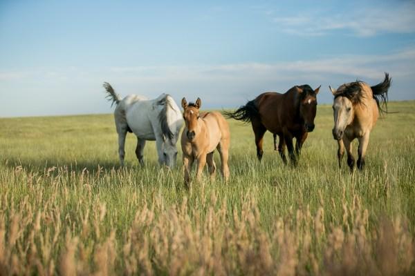 equine liability