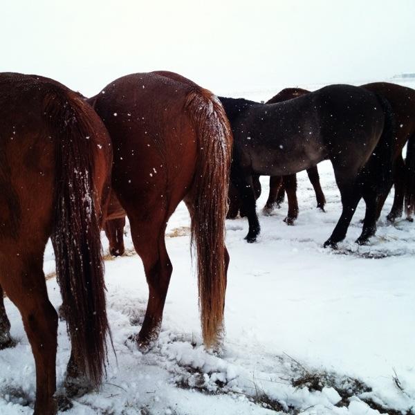 horses, horse photo, horse photography, winter weather, winter photos