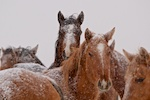 South Dakota Cowgirl Photography, South Dakota photographers, equine photography, winter, horses, winter photography