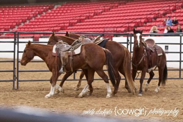 South Dakota cowgirl Photography, Buck Brannaman, Colt Starting, Horsemanship