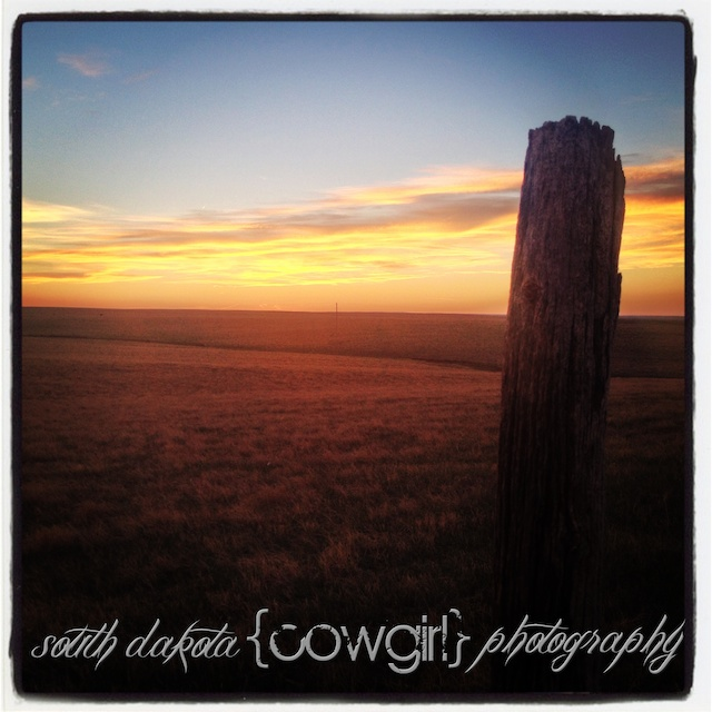 south dakota cowgirl photography, palomino horse, iphone photo, sunset, love, sunset photography
