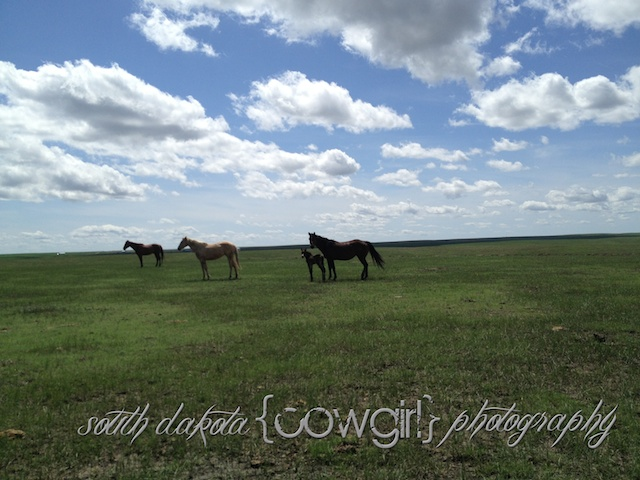 south dakota cowgirl photography