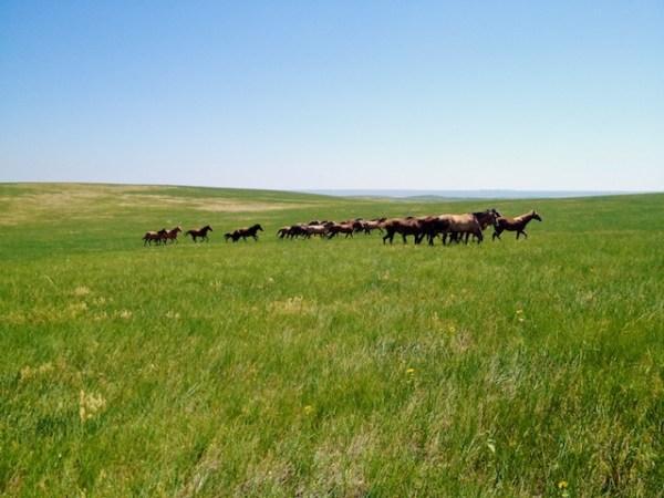 horses, south dakota cowgirl photography