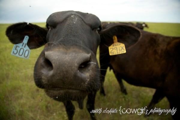 south dakota photographers, south dakota photography, south dakota cowgirl photography, south dakota ranches, south dakota landscape