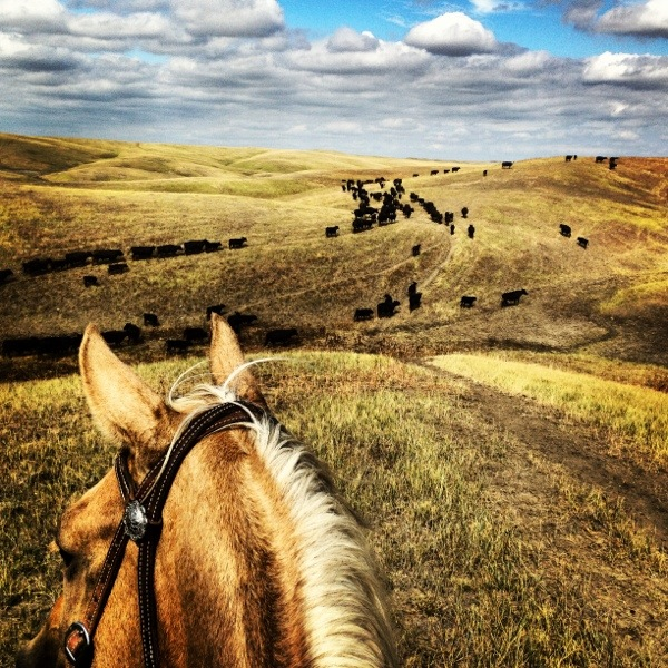 The South Dakota Cowgirl, South dakota cowgirl photography, south dakota, south dakota ranches, ranching photography, iphone photo, iphonephotography