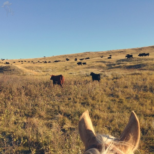 ranching, indian reservation, south dakota cowgirl photography, south dakota, ranch life, ag chat, agriculture, this is ranching, ranchers are NOT farmers