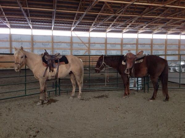 south dakota cowgirl, colt cam chronicles, horses, ranching, horsemanship