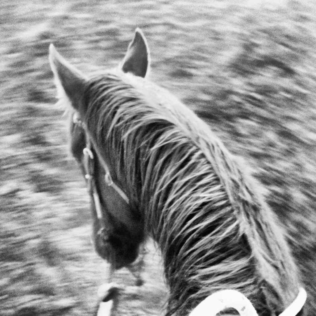 south dakota cowgirl photography, horsemanship, riding a turn around