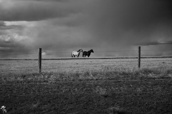 south dakota cowgirl photography, ranch lands, ranching photography, equine photography, south dakota equine photographers, the south dakota cowgirl