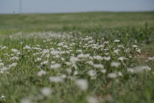 wild onions, south dakota, south dakota cowgirl photography