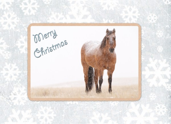western christmas cards, equine christmas cards, south dakota cowgirl photography, horse christmas cards, merry christmas, western art