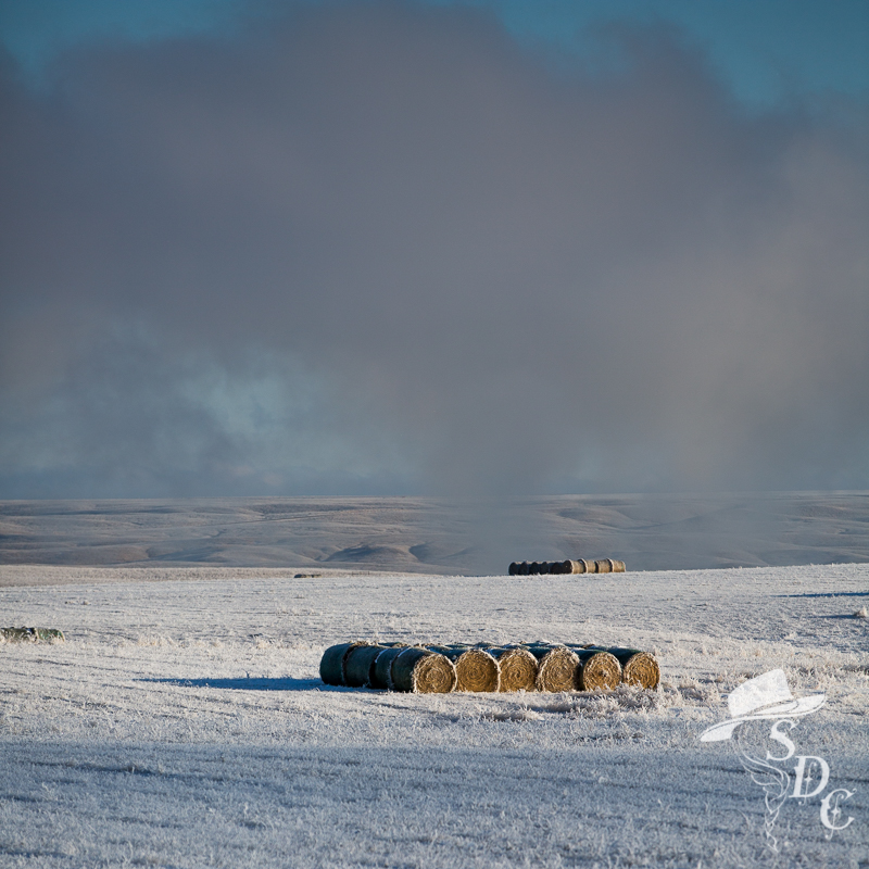 south dakota cowgirl photography, winter on the ranch, winter in south dakota, winter weather, fall work, cattle work