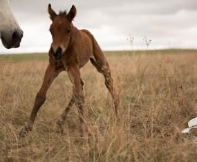 Foals on Film