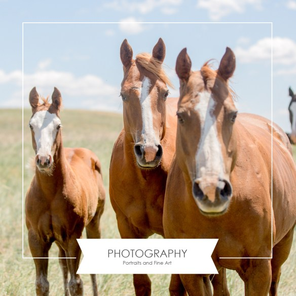 Photography by the SDC, home page, the south dakota cowgirl
