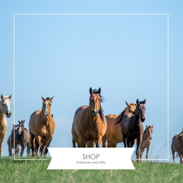 Shop the SDC for stationary and gifts, Photography by the SDC, home page, the south dakota cowgirl
