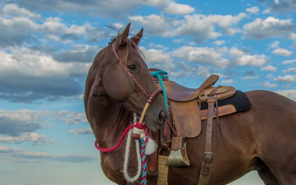 The South Dakota Cowgirl, south dakota cowgirl photography, the dx ranch, hackamore horse, quarter horse