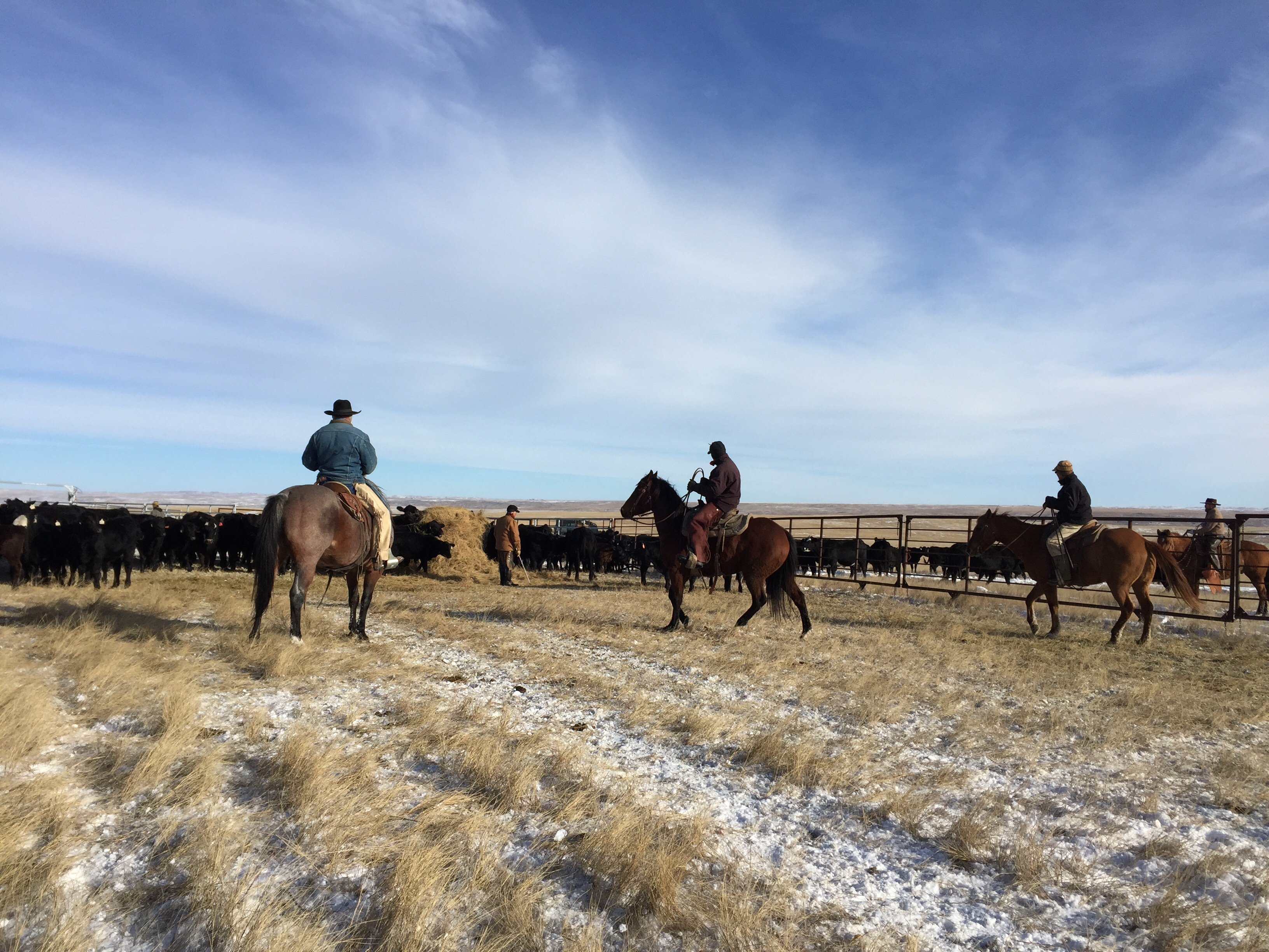 the south dakota cowgirl, ranch life ,ranching, cow work, cowboys, cowboys in the winter