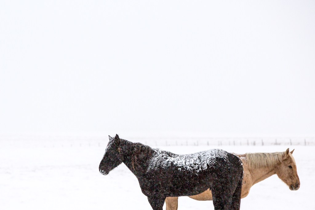 south dakota cowgirl photography, negative space, white space, photos with negative space, winter, horses in snow, snowy horses, horse photography, winter photography, snow photography