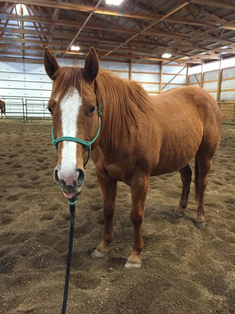 horses, horsemanship, colt starting