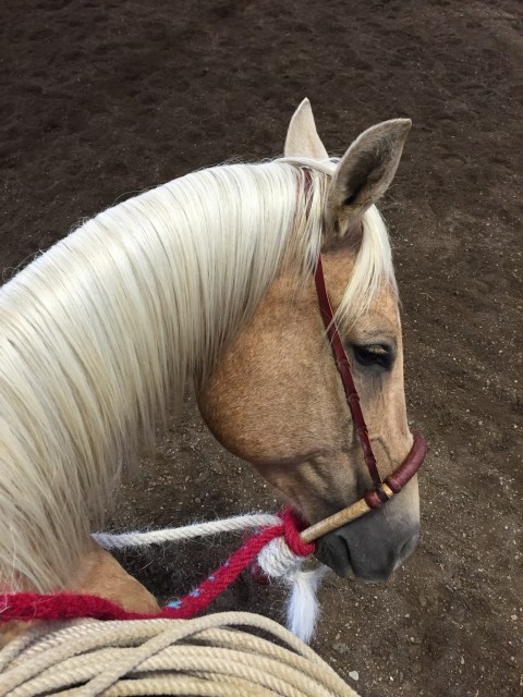 riding with buck, buck clinic, hackamore horse, horsemanship, horses