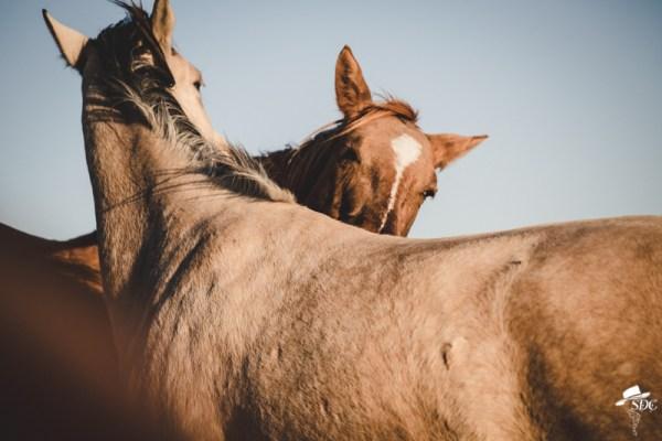 pretty light, south dakota cowgirl photography, I'll scratch your back if you scratch mine