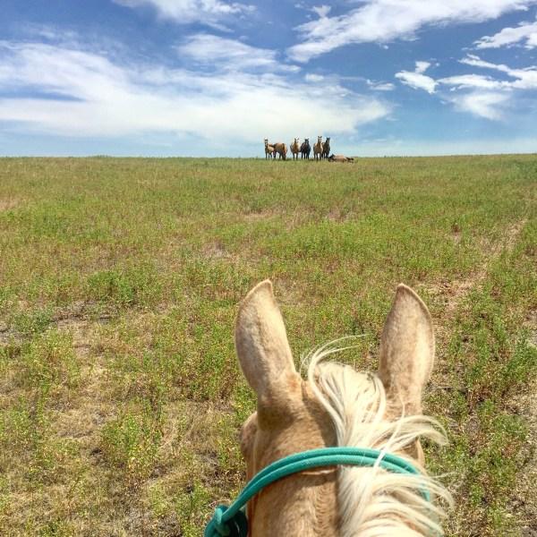 Riding Avie bareback, featured in the September 2016 America's Horse.