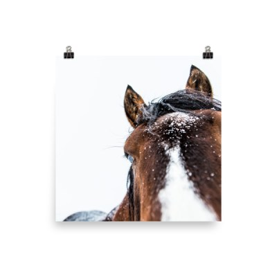 """Fuzz in the Snow"" Photo Paper Poster"