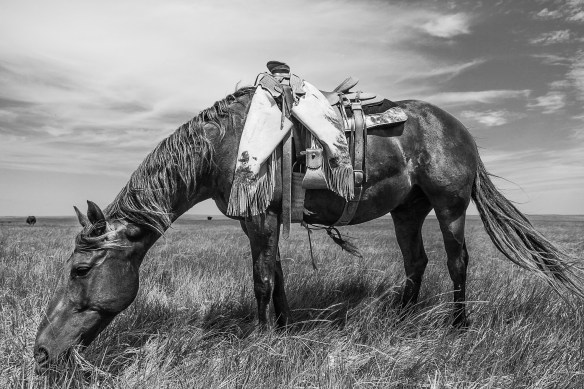 hard working ranch horse, national ag day