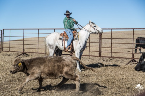 ten things to love about ranch life, roping, cattle, ranching